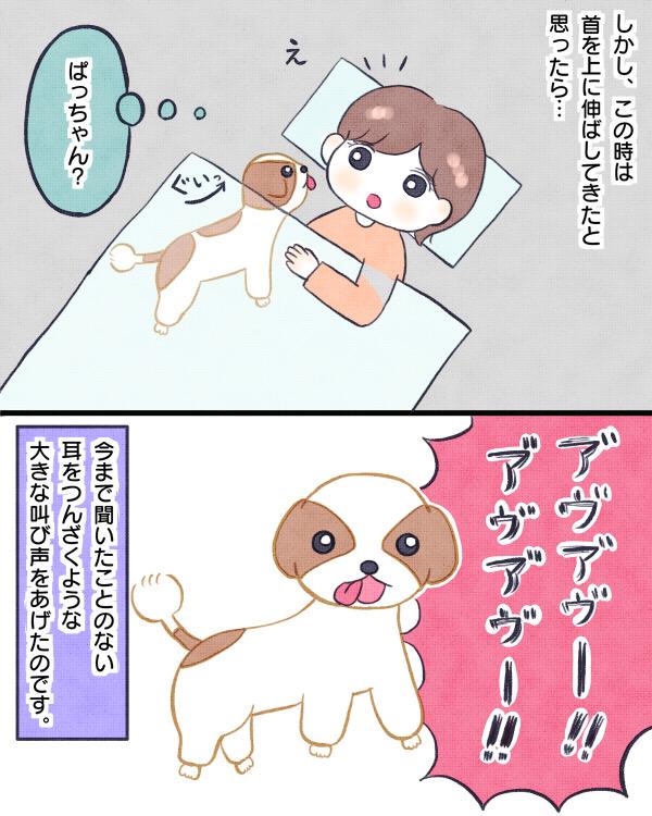 首を伸ばして大声で叫ぶ前庭疾患の痙攣発作を起こす愛犬ぱっちゃん