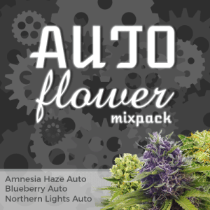 Auto Flowering Feminized Cannabis Seeds Mixpack
