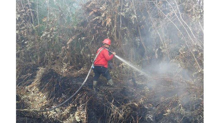 Masih Ada Kebakaran Lahan Gambut di Siak dan Pelalawan