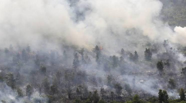 Asap Karhutla Riau Belum Sampai ke Singapura dan Malaysia