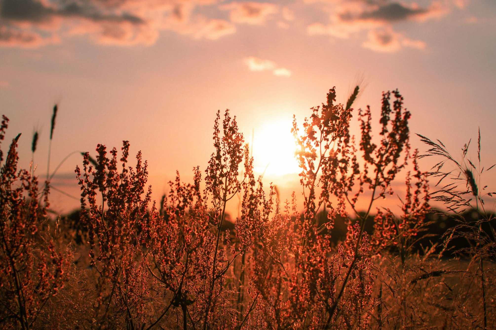 Pflanzen am Rande des Feldes in der Bornimer Feldflur