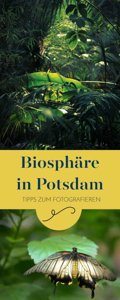 Tipps zum Fotografieren in der Biosphäre in Potsdam