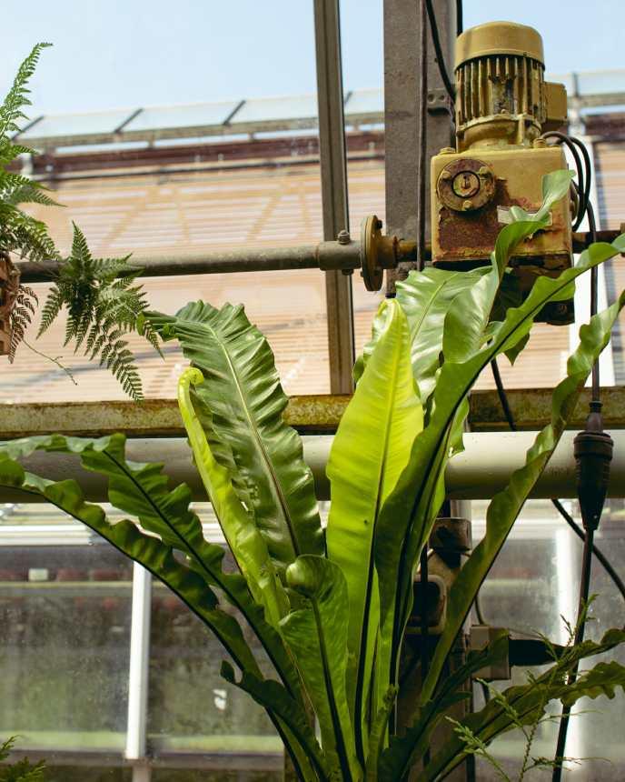 Rohre, Fenster und Schaltungen im Gewächshaus des Bontanischen Garten