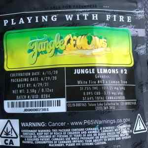 Jungle Boys Jungle Lemons