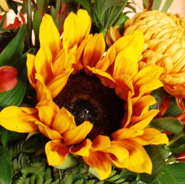 2008-12-05sunflower