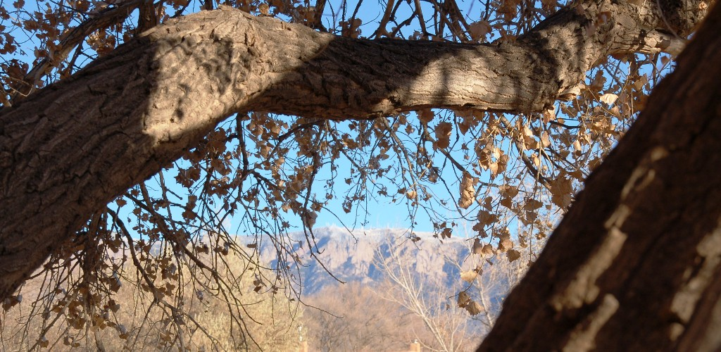 A view of the mountain from the climbing tree