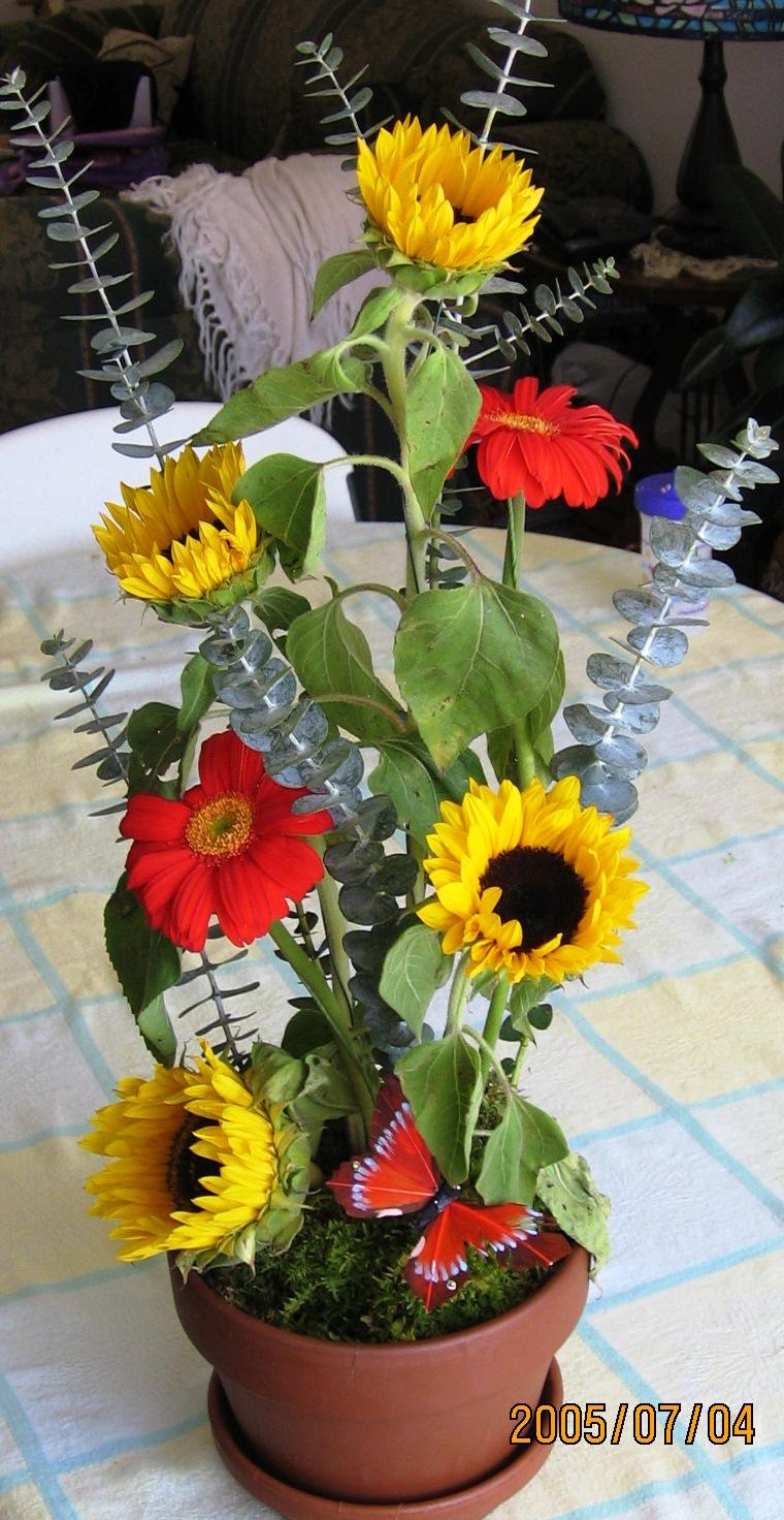 img_0461sunflowers