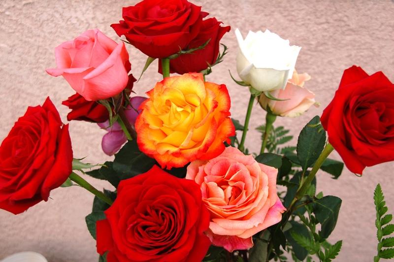 2009-02-26.Roses