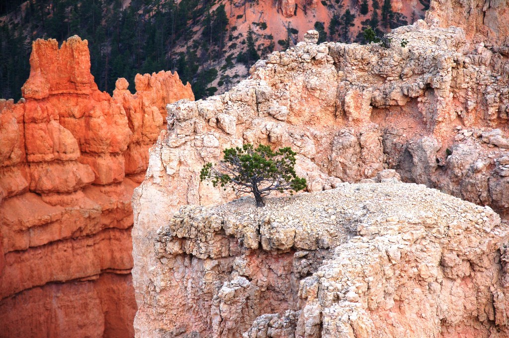 I loved the tenacity this tree growing in territory that should have been hostile too it. (Click photo to enlarge.)