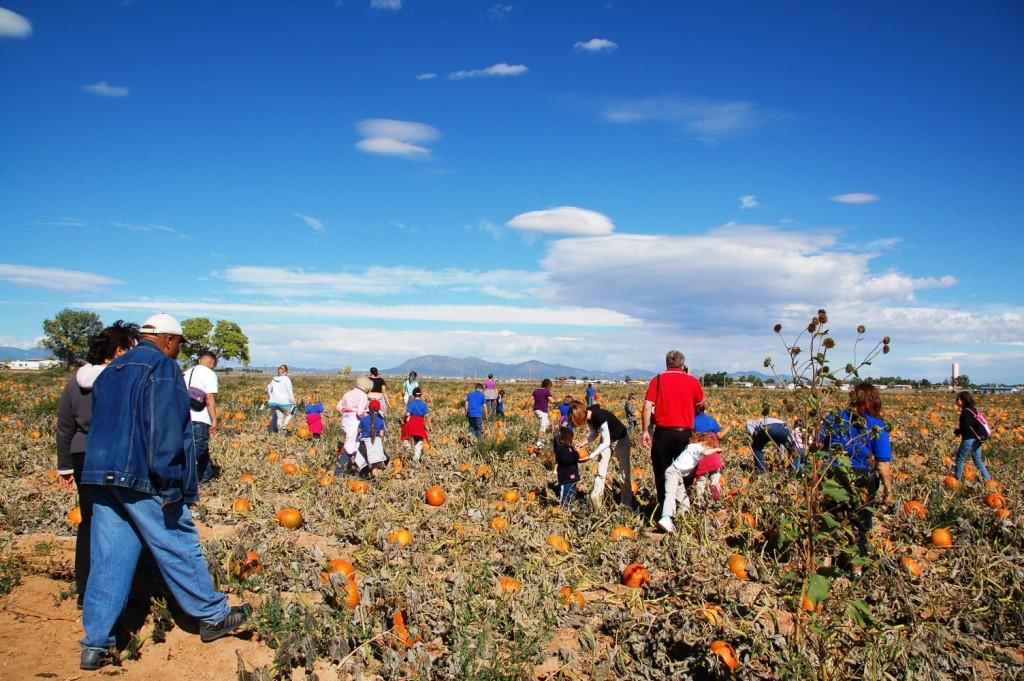 On field trips, the first thing we do is take a hayride to the pumpkin field. Everyone gets a pumpkin. Size doesn't matter as long as they can carry it. It really is funny to watch the kids and what sizes they choose to believe they can carry.