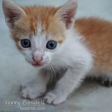 Photo - Blue Eyed Kitten
