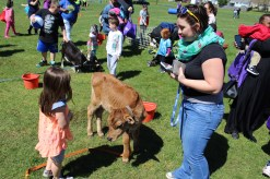 Children and their families enjoy a petting zoo as part of the combined PEAK Pottstown Celebrates Young Children and YMCA Healthy Kids Day event Saturday afternoon.