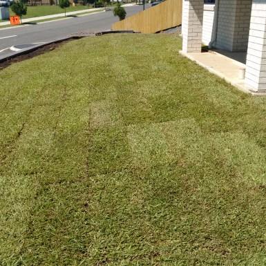Carpet Grass layed at Mullumbimby