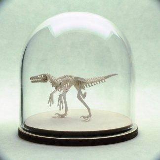 White Velociraptor skeleton in glass display dome