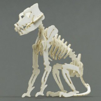 Assembled Canine miniature skeleton model by Tinysaur.us