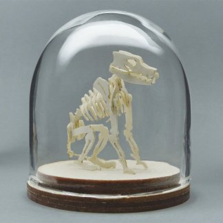 Canine All-in-one miniature skeleton model kit in hand-blown glass display dome by Tinysaur.us