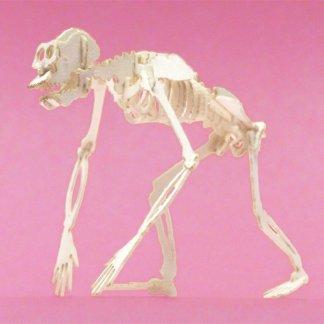 Assembled Chimpanzee miniature skeleton model by Tinysaur.us