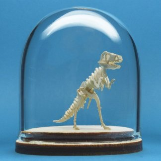 Classic T-rex miniature skeleton model in glass display dome by Tinysaur.us