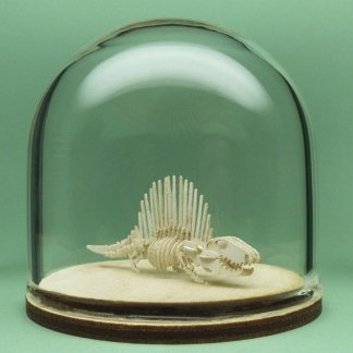 Dimetrodon All-in-one miniature skeleton model kit in hand-blown glass display dome by Tinysaur.us