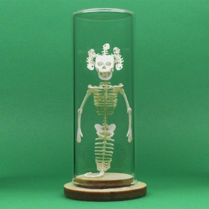Assembled Medusa All-in-one miniature skeleton model kit in glass display dome by Tinysaur.us