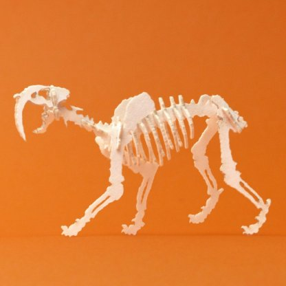 Assembled Saber Tooth miniature skeleton model by Tinysaur.us