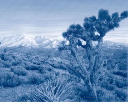 Nevada Desert Pinhole