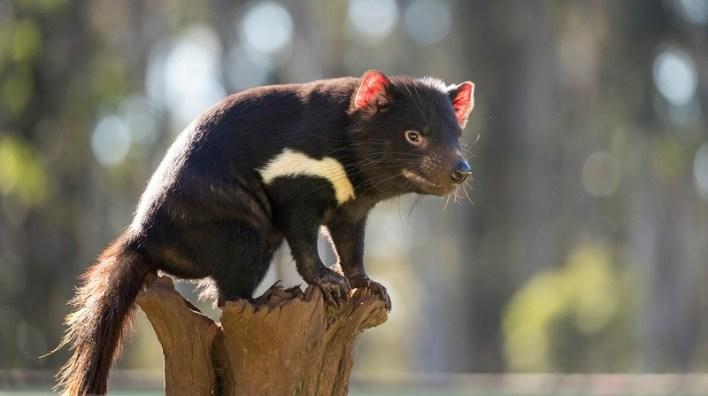 Existem Espécies Animais Que Só Vivem Na Austrália