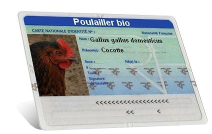 carte identité Gallus gallus domesticus