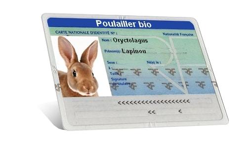 carte d'identité lapin