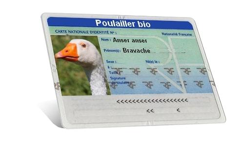 carte identité oie