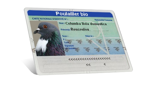 carte identité pigeon