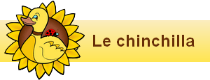 bannière widgets le chinchilla