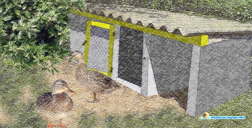 cabane abri pour les canards
