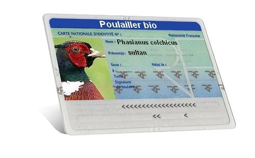 carte identité du faisan