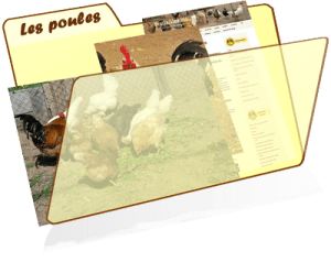 les fiches de la basses-cour bio - poules
