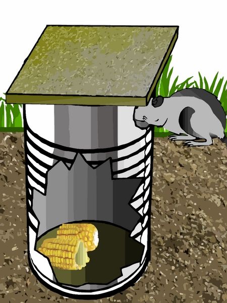 piège à rat fait maison avec une grande boite de conserve