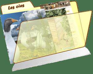 les fiches de la basses-cour bio - les oies