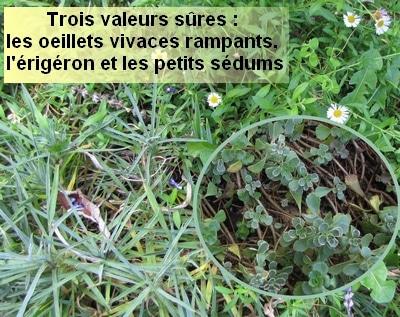 exemples de plantes rampantes pour planter sur un toit de poulallier