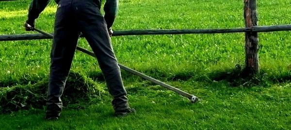 fauchage de l'herbe en bordure de gazon pour les poules