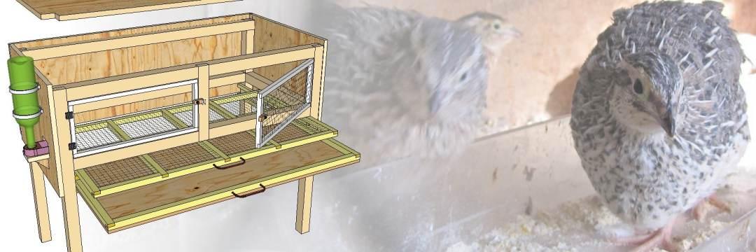Construction De Cages D 233 Levage Des Cailles Plan