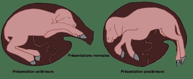 bonnes-presentations-des-chevreau-pour-la-mise-bas