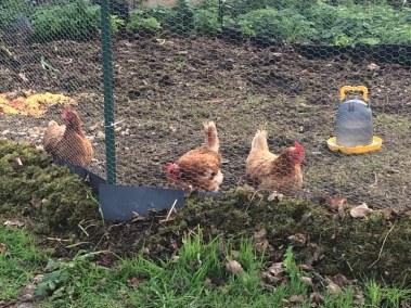 benoit - les trois poules