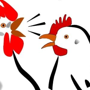 N'en déplaise aux véganes féministes, sans le chant tonitruant du coq donnant le signal de bon matin les poules ne pondraient pas ou si peu.