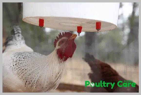 3-Gallon-Plastic-Bucket-DIY-Chicken-Waterer