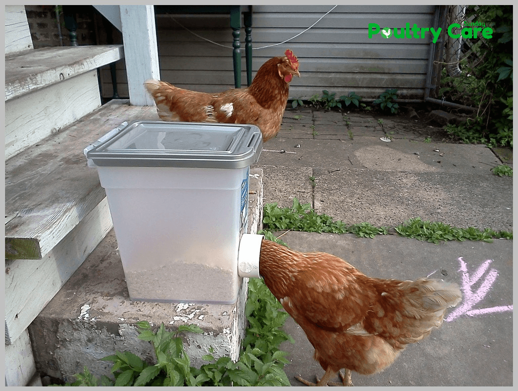 10 diy chicken feeder and waterer plans and ideas for Pvc chicken waterer plans