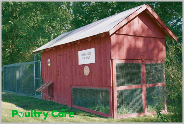 Mammy's_1895_a-frame_chicken_coop