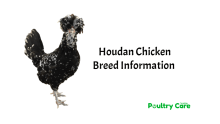 Houdan-Chicken-Breed