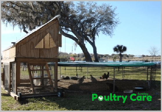 Trampoline DIY Chicken Coop