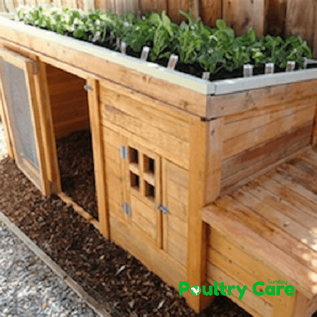 The Self-Sustain Chicken Coop
