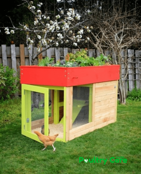 The Small Modern Coop